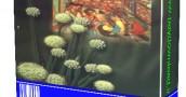 دانلود کتاب اسرار گیاهان دارویی