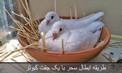 طریقه ابطال سحر با یک جفت کبوتر